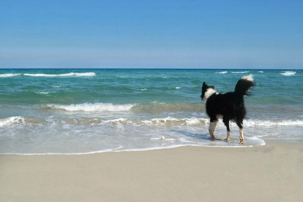 Am Strand im März (Otranto)