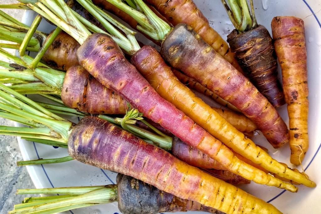 Buntes Möhrengemüse: die Pestanca di Tiggiano