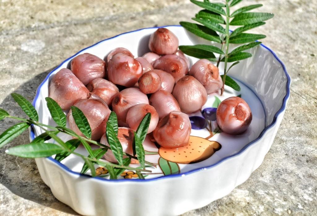 Lampascioni nennt man die Zwiebel der Schopfigen Traubenhyanzinthe in Apulien