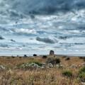 Wandern im Süden Apuliens (Salento)