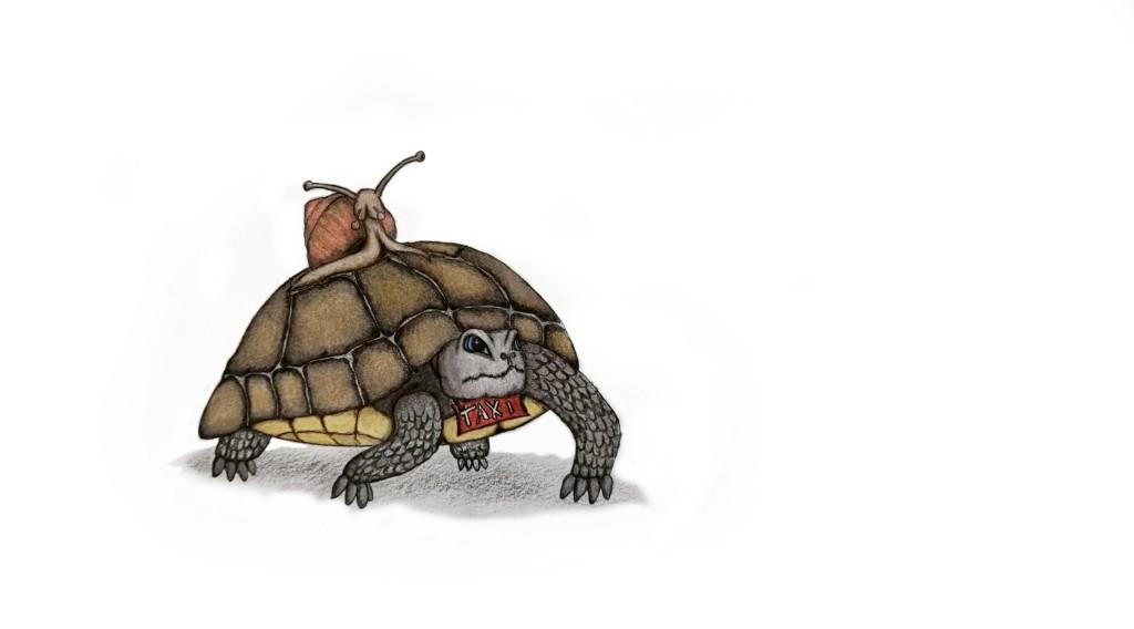 Schildkröte als Taxi